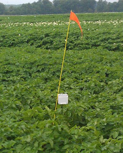 Basenhet i potatisfält.